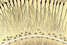 Inspirację natura anatomia mózg