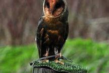 ptáci - dravci - nezvyklé zbarvené