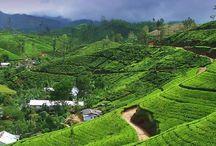 Vacanze in Sri Lanka / http://www.williamtours.com/