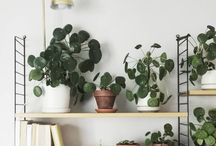 Dream home // plants!!