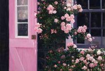 Rosen, ich liebe sie, ♡♡♡, ®™
