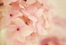 Pinks / My favorite pink is barely pink - it is so delicate <3