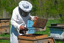Beekeeping / by Åsa Lindstrand