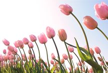 Spring Gardening / Learn tips and tricks to get your garden ready for the Spring.
