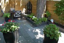 Redo Backyard