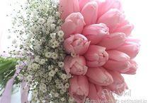 tulipan menyasszonyi