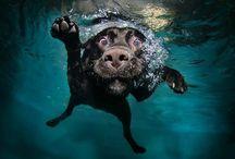 animals / by Natalie Williams