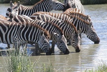 African Travel Tips & Photos