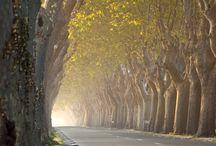 France, Provence.