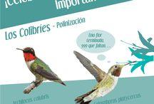 Why Birds Matter