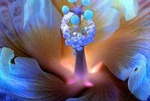Flower Closeups / by Connie Nylund
