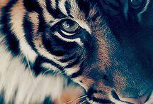 Closeup Nature