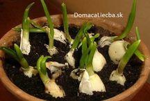 pestovani rostlin