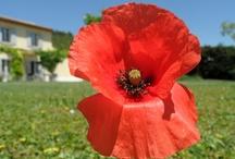 Le jardin de La Bastide des Grandes Terres / Luberon (Provence)