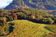 World of Wine / Some of the greatest wineries around the world.