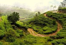 6 days Honeymoon in Kerala - for Rs 12,500 / 6 days Honeymoon in Kerala - Munnar, Thekkady & Varkala