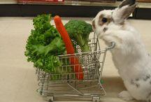 Shopping Bunny