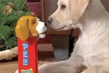 Puppy Loven & Kitty Cuteness