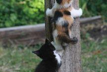 Katt  - Kompis