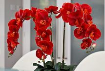 special orchids