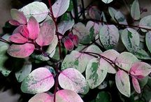 ~Fla gardening~ / by Andrea O'Neil   (MichigAndi~PaleONeil)
