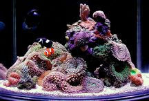 Reef aquariums / by Daniele Cogo