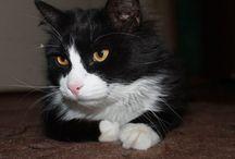 Blog de Gatos