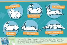 Rabbit info (Emmie)
