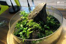 Wabi-kusa / mini garden