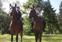 Из жизни конного клуба