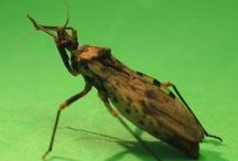 Do You Know About Chagas Disease / by Thomas Byers