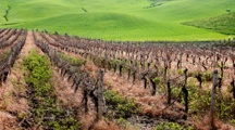 Sicilian Vineyards / And these pins also in the Sicilian Vineyards page of my food and wine blog - CMFoodAnd?