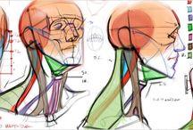 Anatomy/Musculature/NaturalFlow