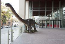 #DinosEnElC3 / ¡Mayo es el mes de la paleontología! Talleres y charlas a cargo de paleontólogos.