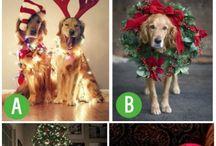 Canine Christmas Ideas