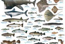 vissen / vissen
