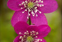 fiori giusi