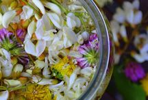 Herbs - tinctures, syrups