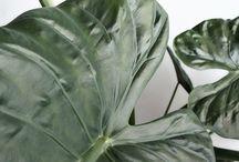 /plants