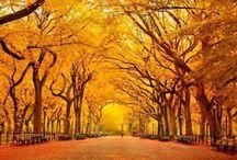 Autumn // Fall