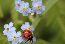 Pretty Witty Lady Bugs
