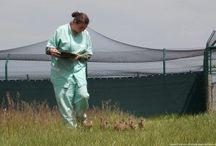 Vogelschutz - Projekte | LigaVogelschutz