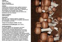 """""""Surpresa"""" - cogumelos do Brasil / O chocolate """"Surpresa"""" foi um clássico dos anos 80. Trazia imagens de espécies da nossa biodiversidade. Resolvemos fazer uma homenagem, com uma série dedicada a cogumelos que encontramos no Brasil."""