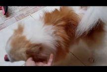 Anjing / Tips tentang perawatan anjing