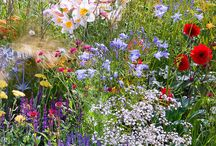 spontaan tuintje / Natuurlijk tuinieren