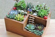 kaktusy i inne kwiatki