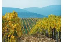 Tokaj : famous wine region in Hungary