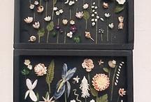 Seashells / by Julia Eigenbrodt