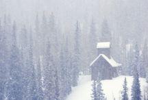 winter / by Janice Swann