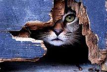escondido